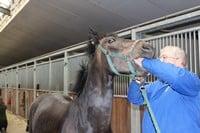 clinical exam horse / klinisch onderzoek paard