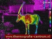 infraroodfoto's dierentuindieren