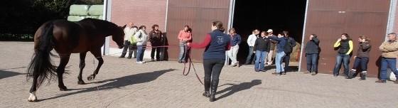 Cursus beoordelen paard