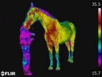 opleiding gediplomeerd paardenthermograaf