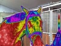 cursus thermografie bij paarden