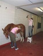 opnametechniek paard