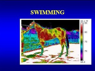 research swimming horses