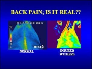 back pain in horses